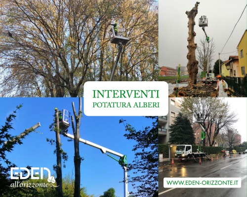interventi potatura alberi su strada