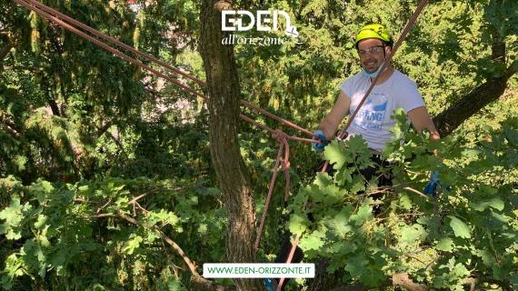 potatura tree climbing in provincia di milano